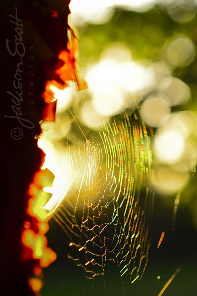 Spiderweb refracts the evening sun.
