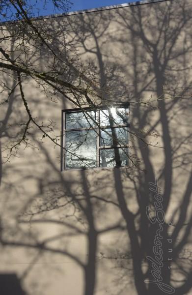 Trees_4842